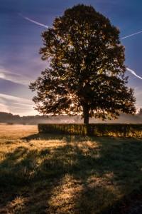 Sunlight through the tree - Germany