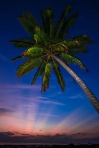 Sunset under a Palm