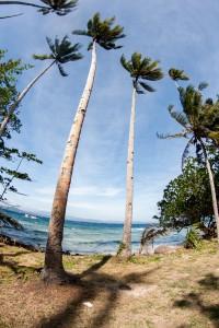 Palms on the Beach